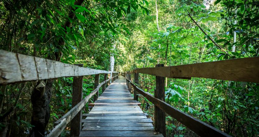 Semana do Meio Ambiente: participe de trilha ecológica com a Unimed Fortaleza